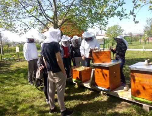"""V okviru projekta """"ČEBELA"""" potekale delavnice za čebelarje začetnike"""